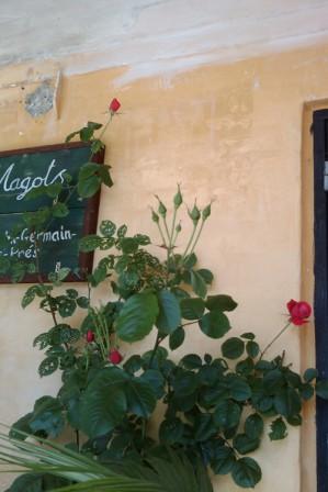 roser i skyggen © 2011 - Iminhave.dk