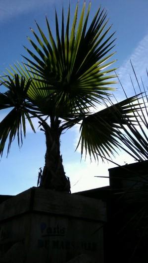 wpid-IMAG2033.jpg