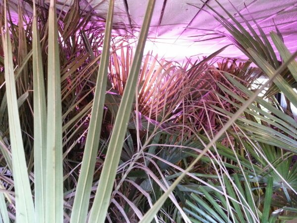 mine palmers frostfri vinterhi