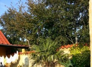 Terrassen med vasketøj og palmer