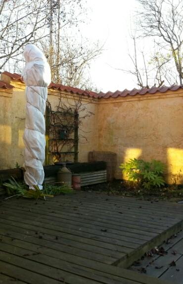 en stor hørpalme vinter beskyttet i vores have © iminhave.dk