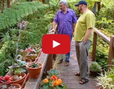 eksotisk gangbro i haven