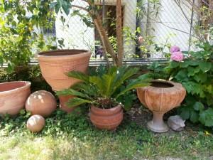 Masser af krukker og palmer