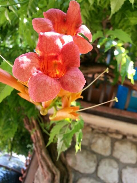 Blomster i pottemagerens gård