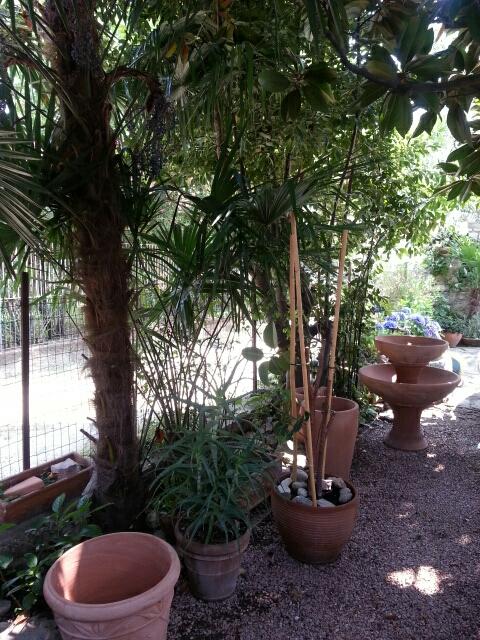 Hørpalmer og terracotta