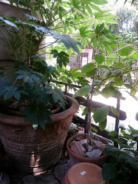 Eksotiske planter og terracotta