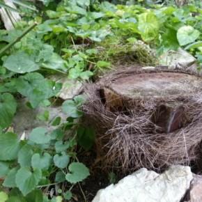 Her fælder man palmer når de bliver for store © iminhave.dk