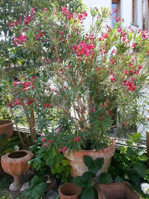 Fuchsia og terracotta