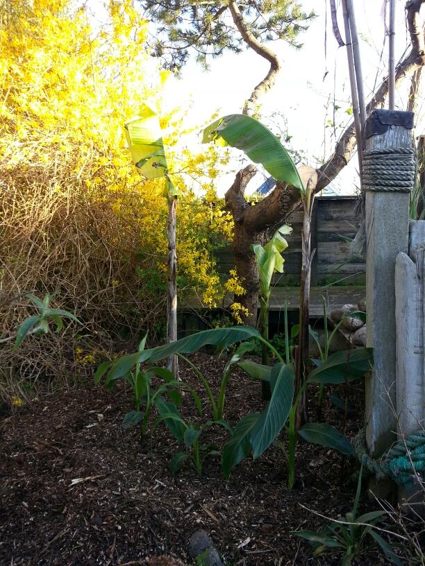 Bananplantagen er også under udvikling © iminhave.dk