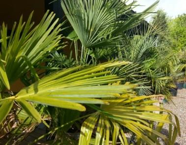 palmer på vej ud i haven