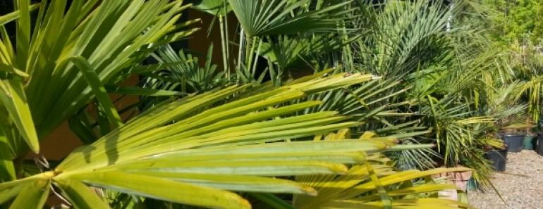 Følg livet i min eksotisk palmehave i nordjylland, danmark.