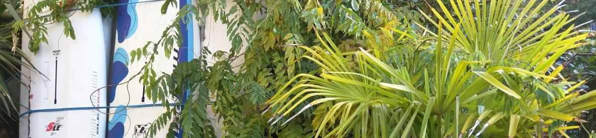 i min eksotiske have