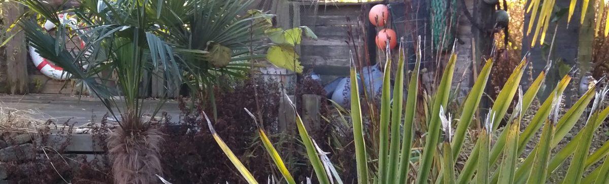 Historier fra en eksotiske have i Nordjylland